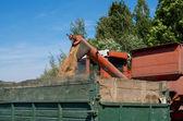A combine pours grain into a dump truck — Stock Photo