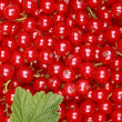 Fresh red currants — Stock Photo
