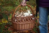 Collecting mushrooms — Stock Photo