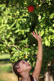 リンゴのために達する女の子 — ストック写真
