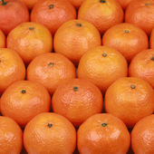 Freshly harvested tangerines — Stock Photo