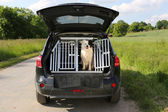 Dog in a car — Stock Photo