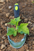 Small plant on a planting trowel in a garden — Stock Photo