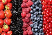 Berry fruits in a row — Stock Photo