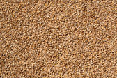 Wheat seeds background — Stock Photo