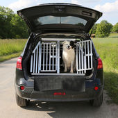Dog pet in a car wants to travel — Stock Photo