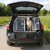 Hund husdjur i en bil vill resa — Stockfoto