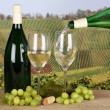 White wine pouring from bottle into wine glass in vineyards — Stock Photo #43070353