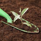 小さな植物の新しい生命、パワーと強度 — ストック写真