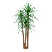Exotic palm tree — Stock Photo
