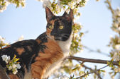 Cat sits in tree — Stock Photo