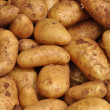 Potatoes — Stock Photo #25092243