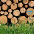 Stock Photo: Pile of timber