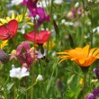 Stock Photo: Wild summer flowers