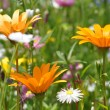 Wild summer flowers — Stock Photo #28048049