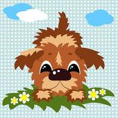 Puppy . — Stock Photo