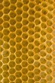 Honeycomb fo honey closeup macro background. — Stock Photo