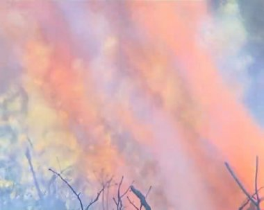 Flames destroy everything alive. fire in the forest. — Stock Video
