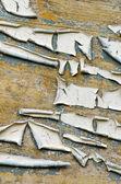 Abbandonato grunge parete in legno vernice buccia sfondo — Foto Stock