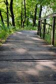 Escalera de madera por naturaleza envolvente árboles césped — Foto de Stock