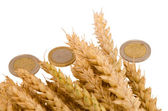 Wheat ripe harvest ears euro coins isolated white — Stock Photo