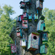 Colorful bird houses nest box hang old tree trunk — Stock Photo