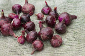 Red onion healthy vegetable harvesting — Stock Photo
