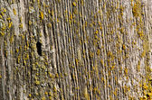 Wooden plank moss board wall disruption background — Stock Photo