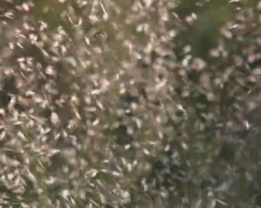 Blurred view of grassland plants moving in the wind. — Stock Video