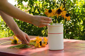 Woman hands put rudbekia flowers in white vase — Stock Photo