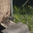 A lot of bees buzzing around a hive manhole. beekeeping. - Stock Photo