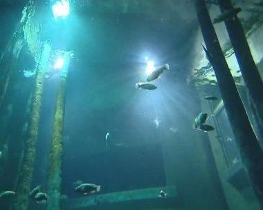 Grote aquaria in dierentuin vol met vissen verlicht met zonlicht. — Stockvideo