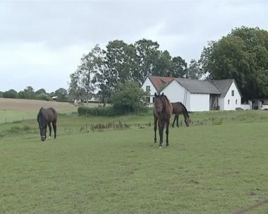 Three brown horses eat grass in the meadow. stables in suburb. — Stock Video
