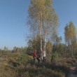 Workers cut young birch grove with petrol chainsaw. — Vídeo de stock #15684701
