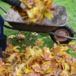 Woman load barrow leaves — Stock Video