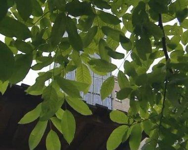 Ramas de árboles de manzana, colectores solares. producción de energía verde. — Vídeo de Stock