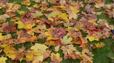 Autumn leaves fall meadow — Stockvideo