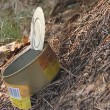 Stock Video: Ants running on preserves box emitted in forest.