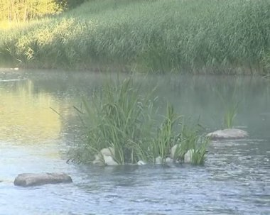 Flowing river. abundant flora. water chatter and singing birds. — Stock Video