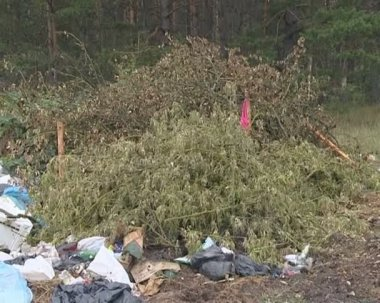 Huge heap of garbage left at the forest. environmental pollution — Stock Video