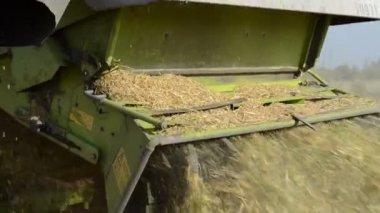 Combine harvest wheat — Stock Video