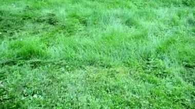 Barefoot woman grass cut — Stock Video