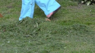 Woman rake grass lawn — Stock Video