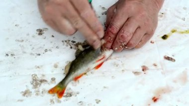Fisherman clean fish — Stock Video