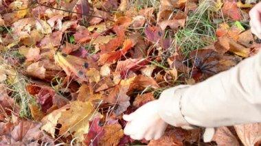 Woman pick maple leaf — Stock Video