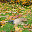 图库照片: Rake tools lie autumn meadow ground color leaves