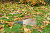 Rake tools lie autumn meadow ground color leaves — Stock Photo