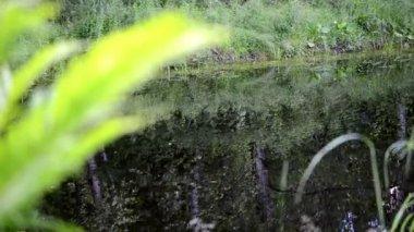 пруд размытие листьев папоротника — Стоковое видео