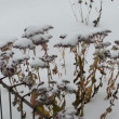Stock Video: Snow fall flower remain