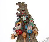 Eski ölü ağaç gövde renkli kuş yuva kutusu asmak — Stok fotoğraf